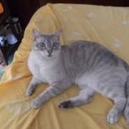 Ariadna y su bello gato Merlín