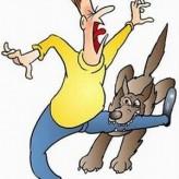 Como evitar la mordedura de un Perro