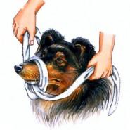 Los perros y los primeros auxilios básicos