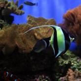 Parásitos en lo peces de colores,  síntomas de infestación