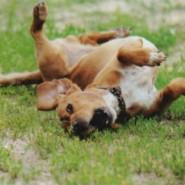 Tratamiento para la ansiedad en los perros