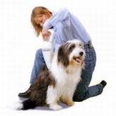 Causas de la pérdida de pelo en los perros