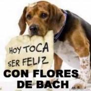 Como mejorar la salud de los perros con Flores de Bach