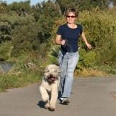 Como ejercitar a un perro diabético