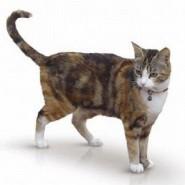 Lo que nos comunican los gatos con su cola