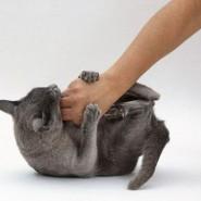 Como tratar las mordeduras de gatos