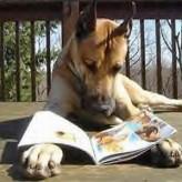 Descubre cuales son los animales más inteligentes