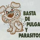Pulgas y garrapatas en los perros