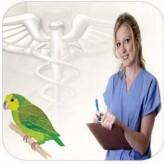 Síntomas y causas de las enfermedades en los loros