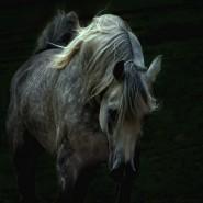 Bellas imágenes de caballos