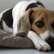 Depresión en la mascota
