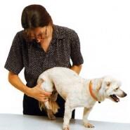 La Artritis en perros