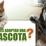 Queremos ser adoptados 5