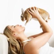 Cómo entrenar a tu conejo