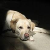 El cansancio del perro