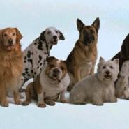 Evitar caída del pelo en perros