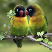 Los Agarponis inseparables