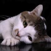 Cómo cuidar un gato con Depresión