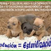 Cuidados al esterilizar perros