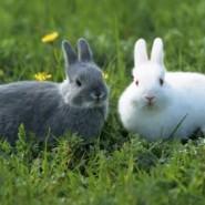 Cuidados en la crianza de los conejos