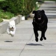 Necesidad de ejercicios en perros
