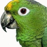 Problemas visuales en las Aves