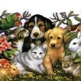 Tener mascotas en casa