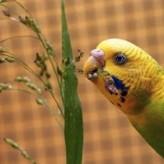 Vitaminas y minerales para las aves