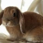 Otras afecciones de los conejos
