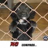 Queremos ser adoptados 8