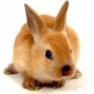 Acaros en los Conejos
