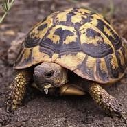 Alimentación de la tortugas de Tierra