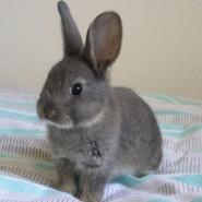 Características de los conejos