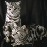 Enfermedades de gatos