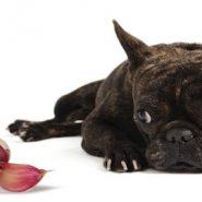 Frutas y Verduras no aptas para Perros