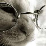 Los gatos y la vejez