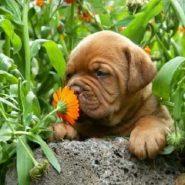 Plantas Medicinales para Perros