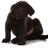 Alergias en los Perros síntomas y cuidados