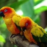 Cuidados importantes para Pájaros
