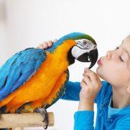 Errores en el cuidado de las Aves