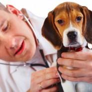 Intoxicaciones de Mascotas