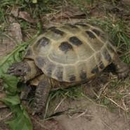 Las tortugas y su salud