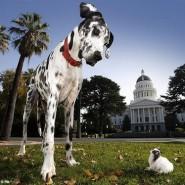 Los perros y sus curiosidades