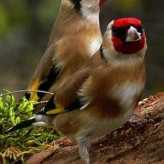 Aves para tener como Mascotas