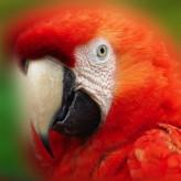 El Papagayo cuidados especiales
