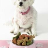 Horarios para alimentación de Perros