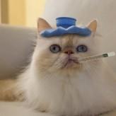 La Gripe Felina
