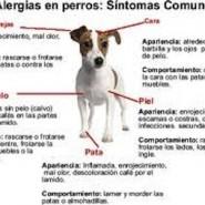 Las alergias en los perros