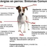 Alergias Caninas