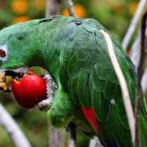 Cómo Alimentar en forma correcta un Pájaro